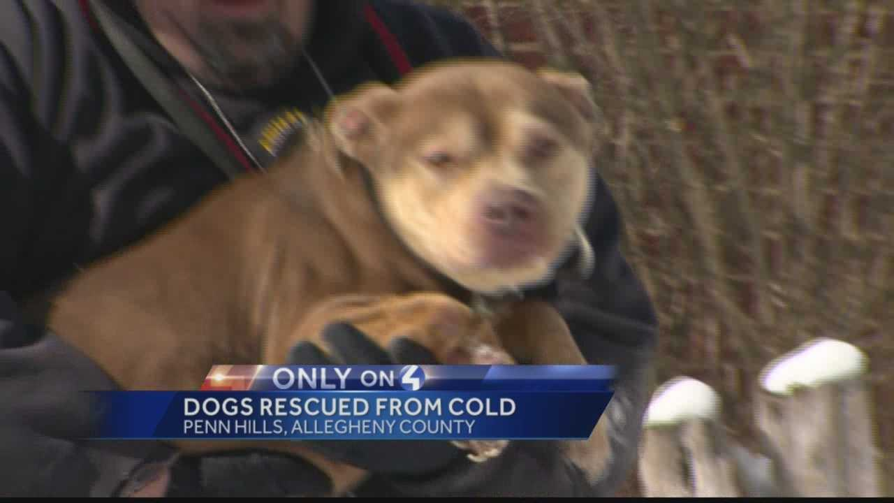 Dogs chained outside in cold seized from Penn Hills home