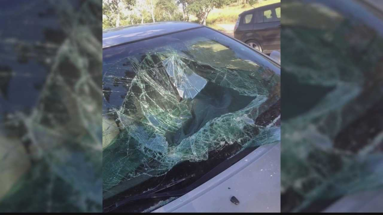 A woman could do nothing but laugh after a black bear broke into her car, destroyed the interior while trying to escape, and finally busted out through the windshield.