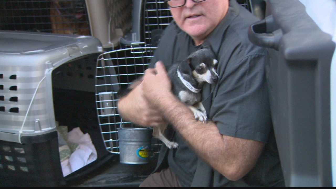 Dogs displaced from record-breaking floods in the Carolinas arrive in Pittsburgh to find their forever homes.
