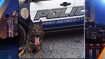 K-9 ArenPort Authority of Allegheny County Police Department, PAEOW: Sunday, January 31, 2016Cause of Death: Stabbed