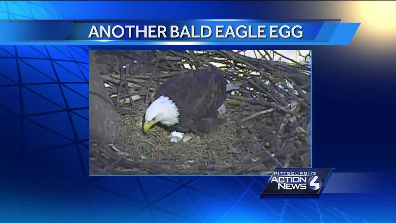 A third egg has been spotted in the bald eagle nest in Hays.