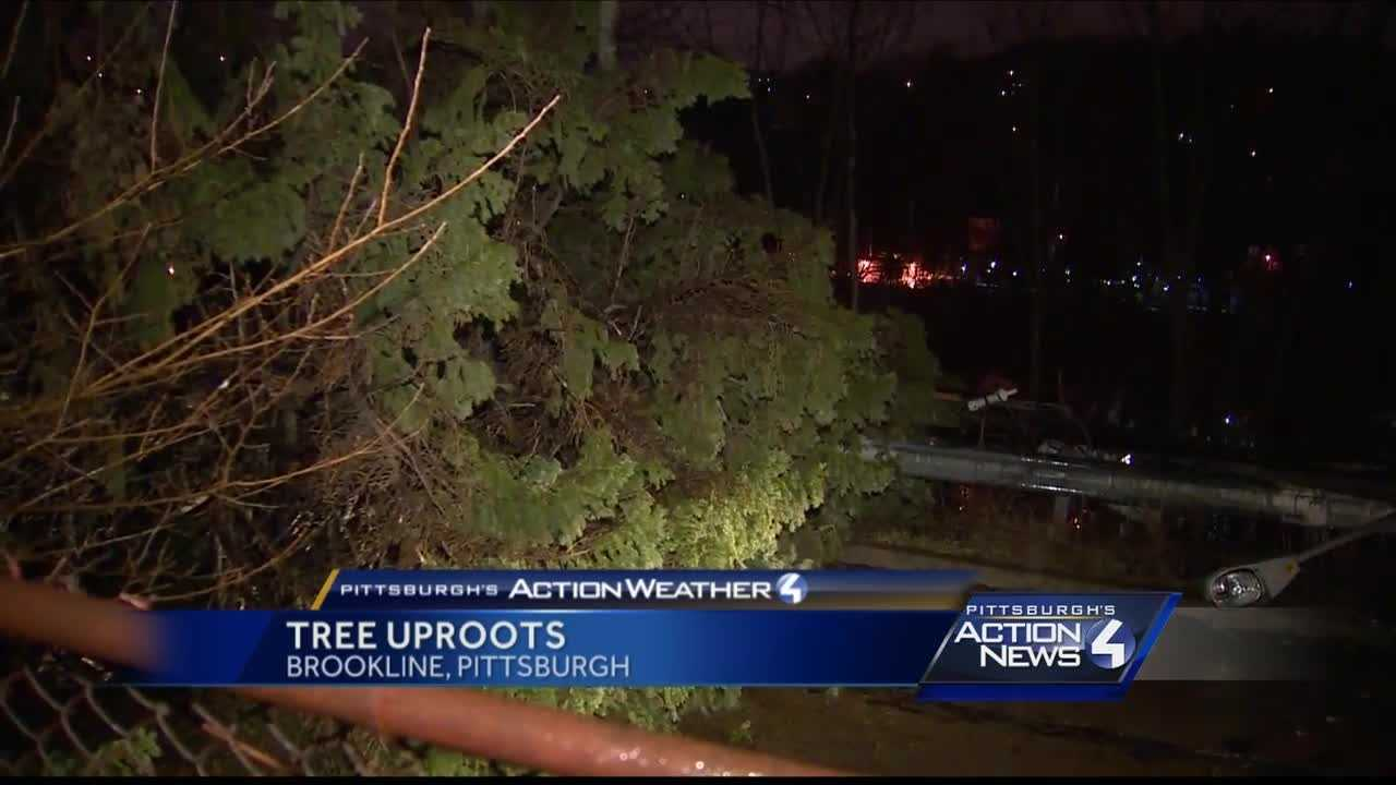 Pittsburgh's Action Weather Meteorologist Ashley Dougherty on the scene after strong winds bring down a tree in Brookline