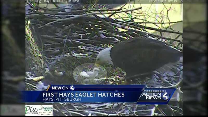 img-Bald eaglet emerges in Hays nest