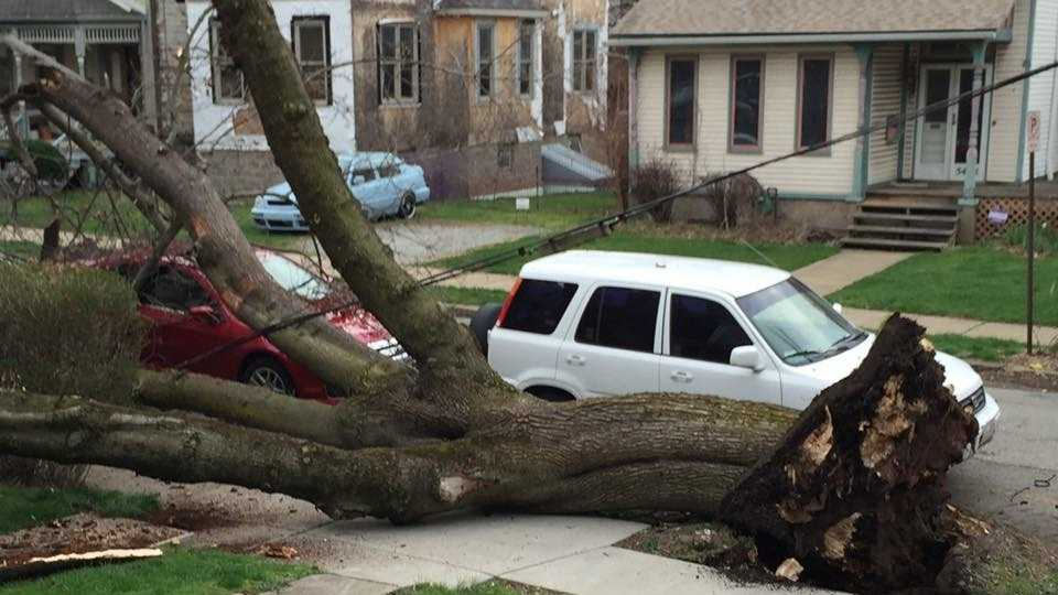 No one was injured Saturday morning after a tree fell in Shadyside Saturday morning. (Photo courtesy Mark Sutton)