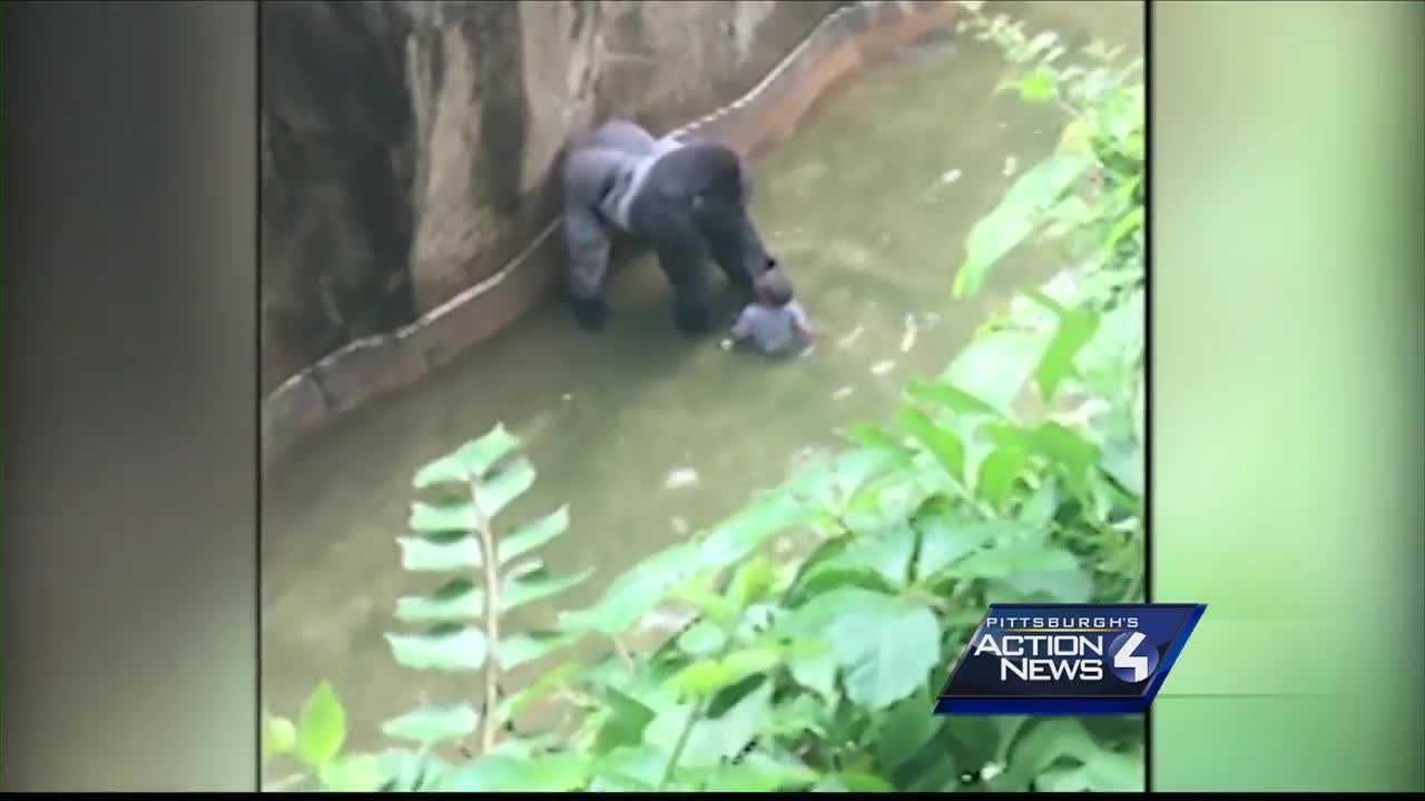 img-Owner of Pittsburgh-area animal park defends decision to kill gorilla in Cincinnati