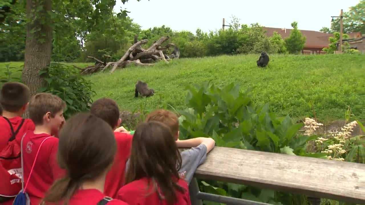 img-kids at zoo watching gorillas