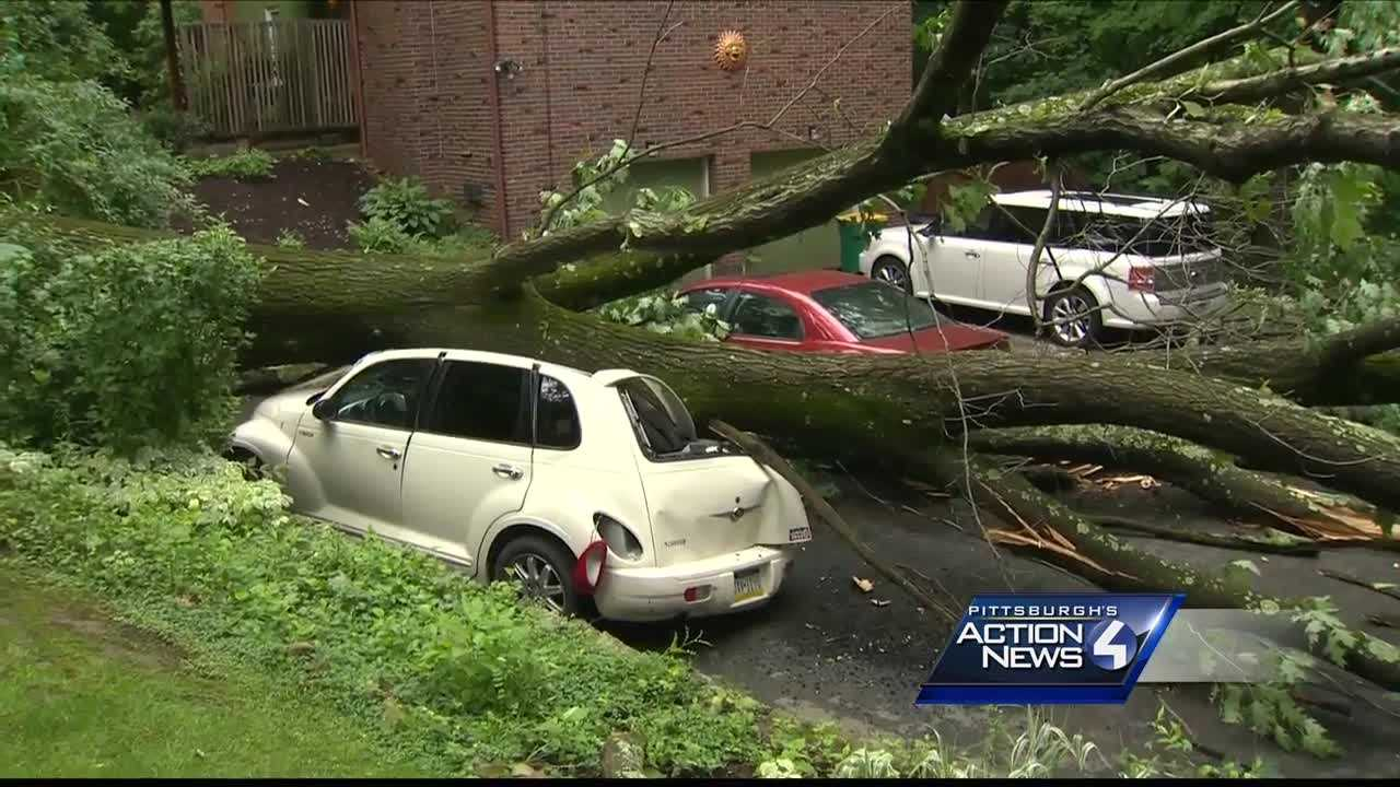 tree crushes car