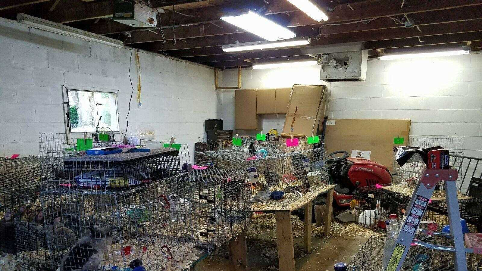 Beaver County rabbits recovered