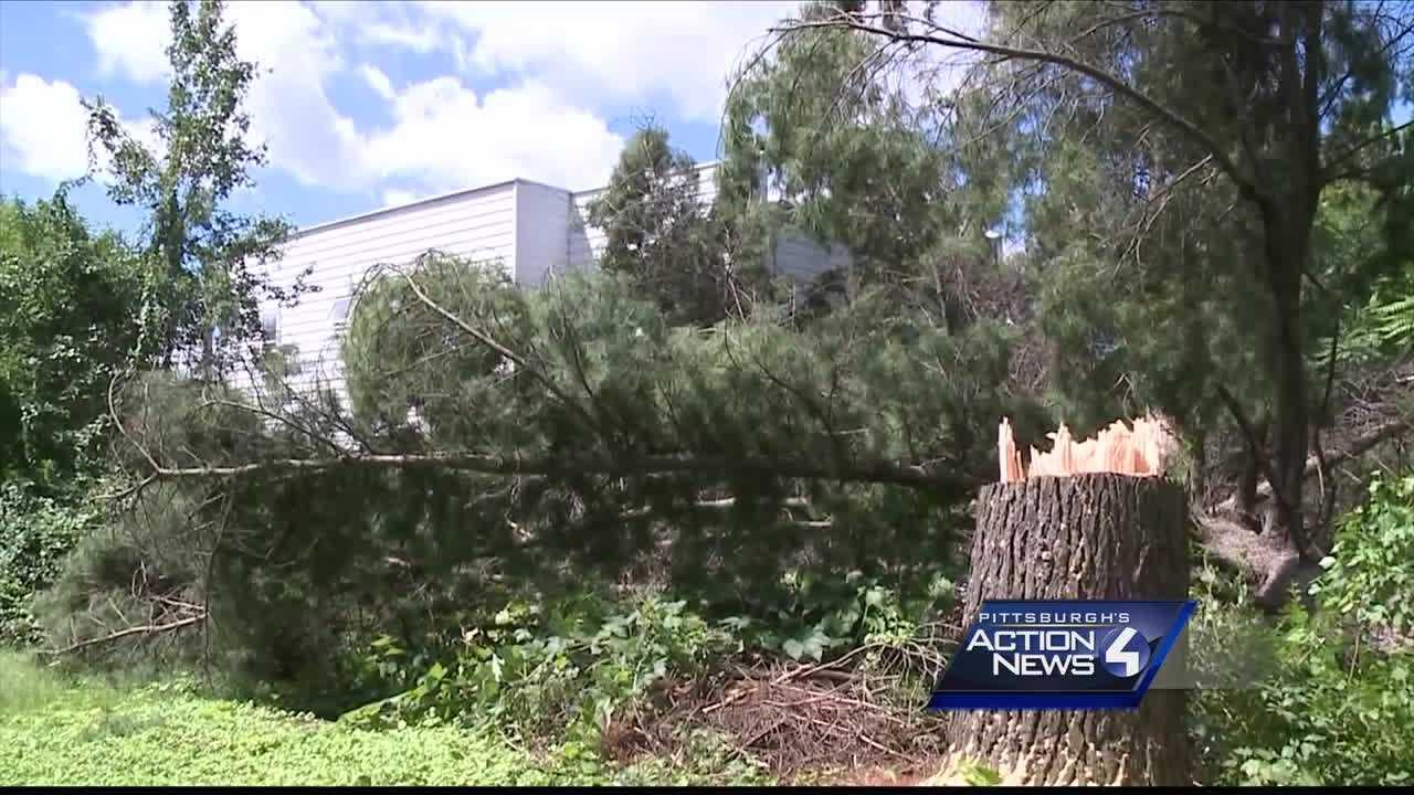 sap tree hits home