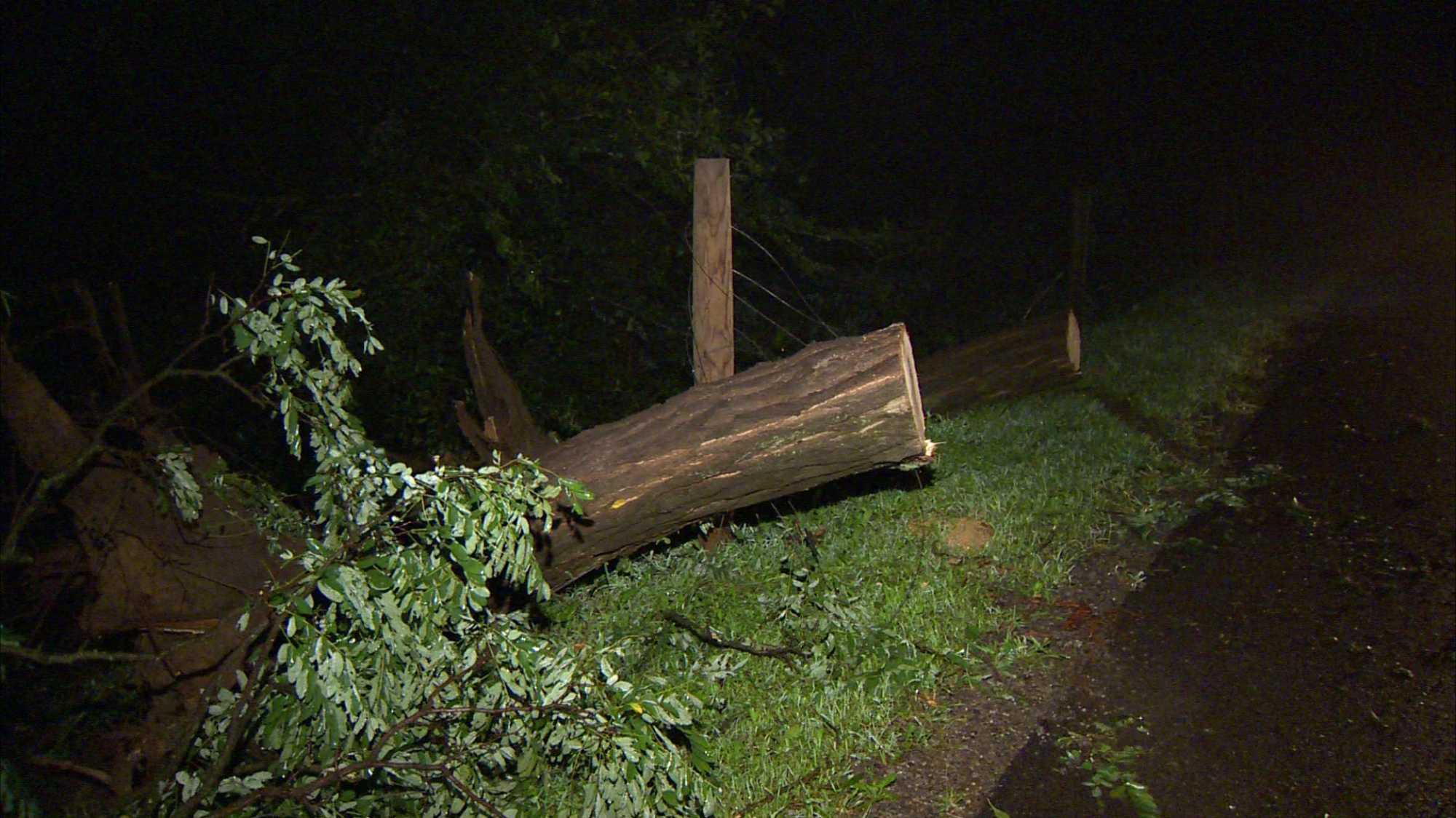tree down, storm damage