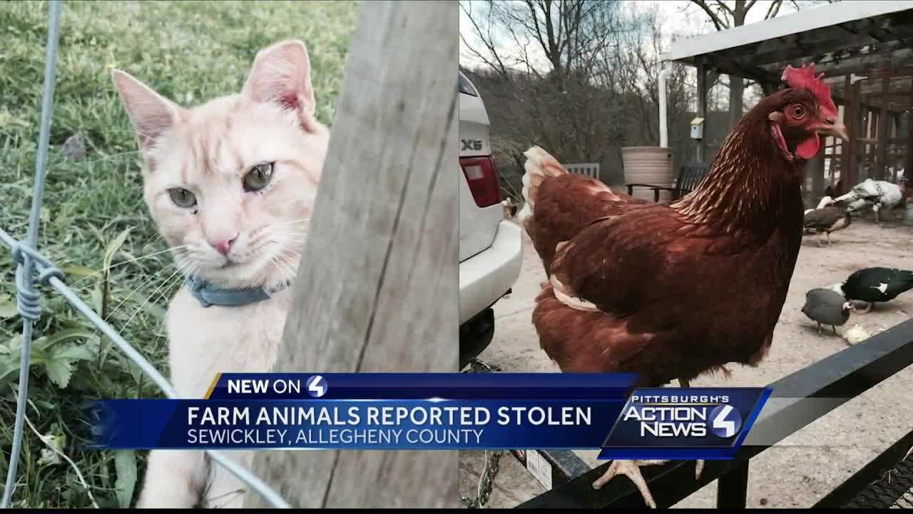 Two animals were stolen from the Hope Haven Farm Sanctuary in Sewickley Saturday night.