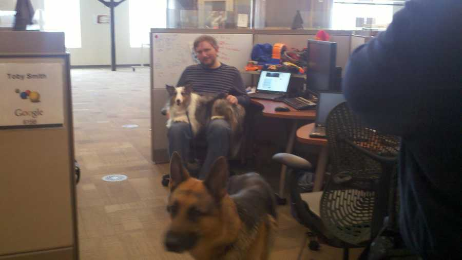 One employee brought his dog to work.