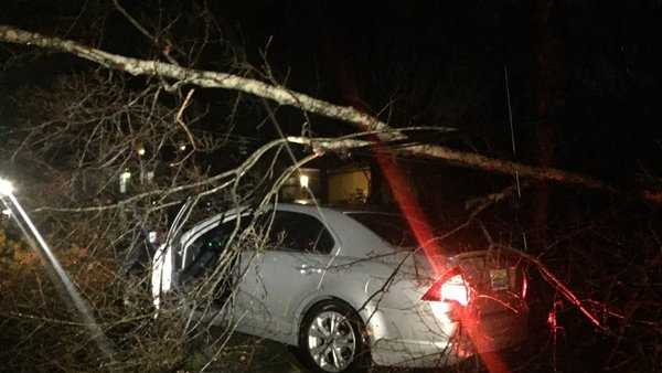Tree toppled onto car off of Dickey Springs Road