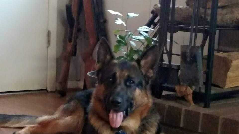 missing service dog.jpg