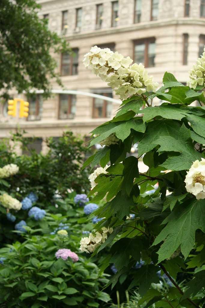 The oak-leaf hydrangea was deemed the state wildflower in 1999.