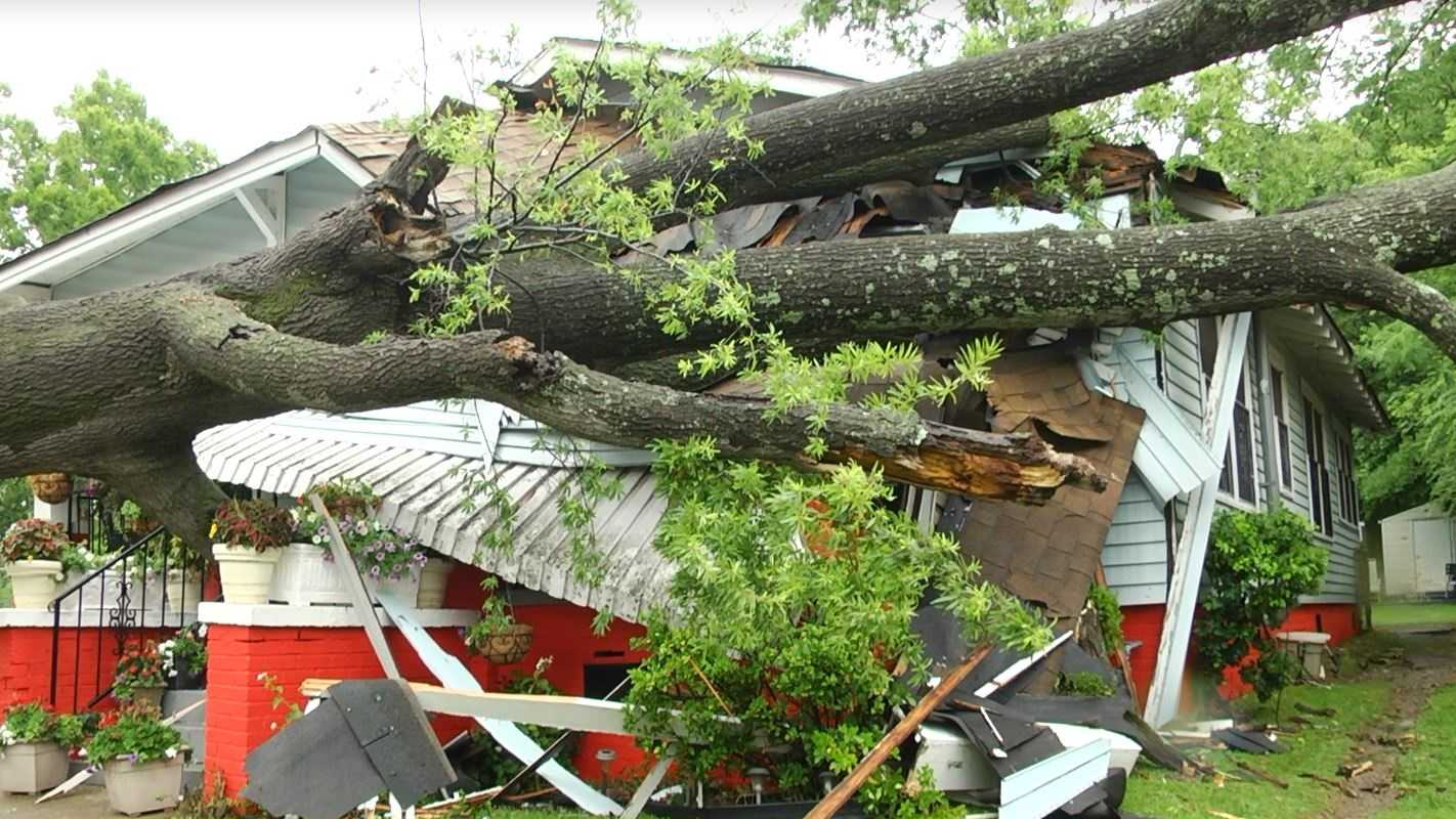 tree on house.JPG