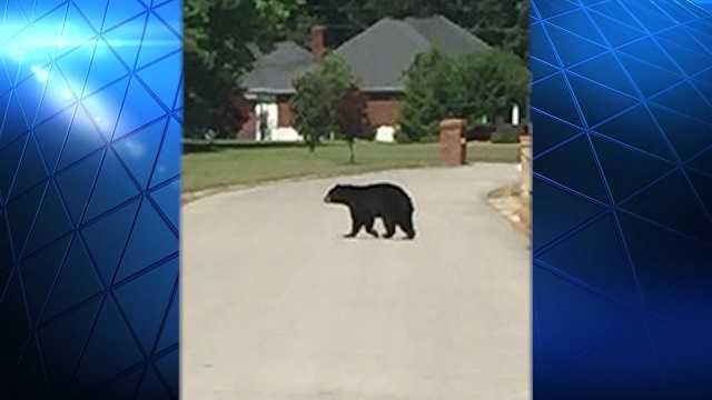 Mating season brings bears to East Alabama