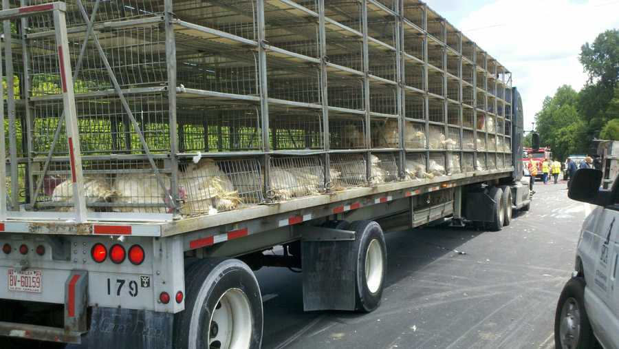 A truck hauling about 1,000 live turkeys turned on its side Thursday morning. Click through for photos from WXII's Rich Cisney.