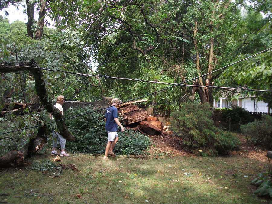 250 year old tree falls on property at home on Valley Road and intersection of Tangle Lane...