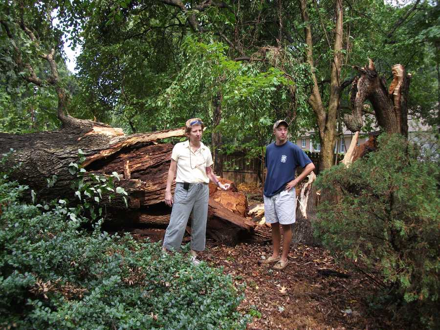 See how big the old tree is compared to these two people standing in front of it. Both close to six feet tall.