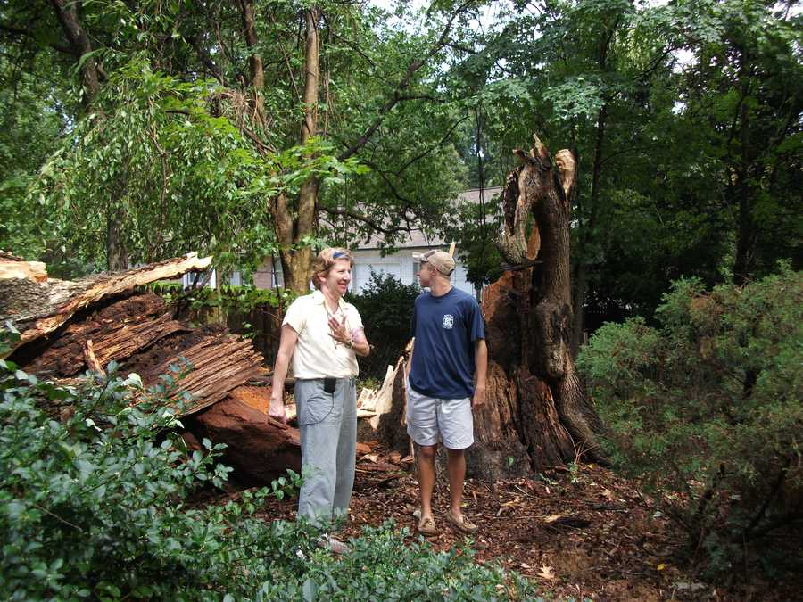 These tall people really look small compared the 250 year old tree that was knocked down during the storms on Friday around 4pm.