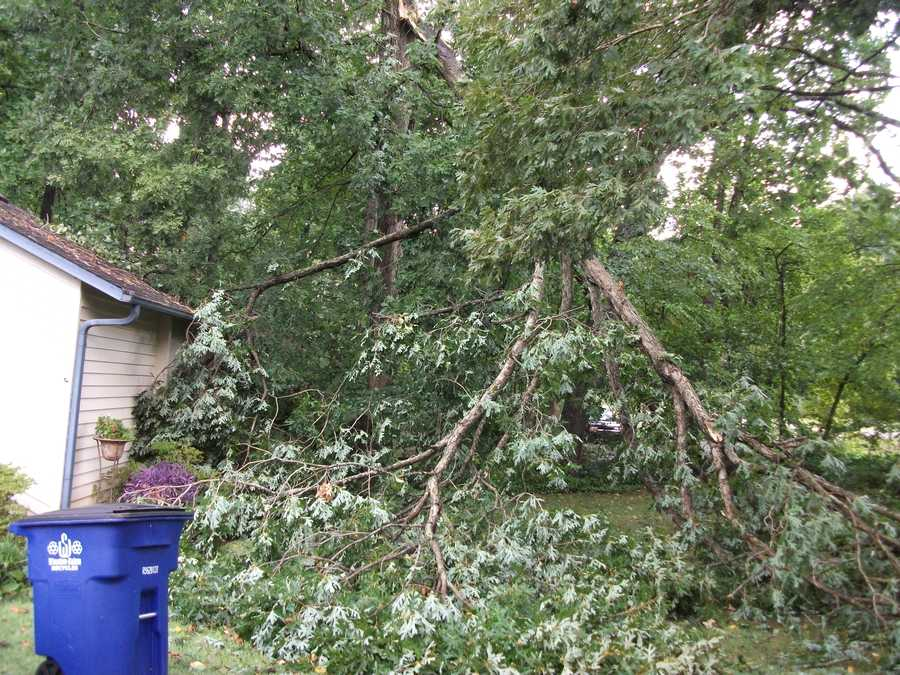 Large tree fell onto house and yard during storm.