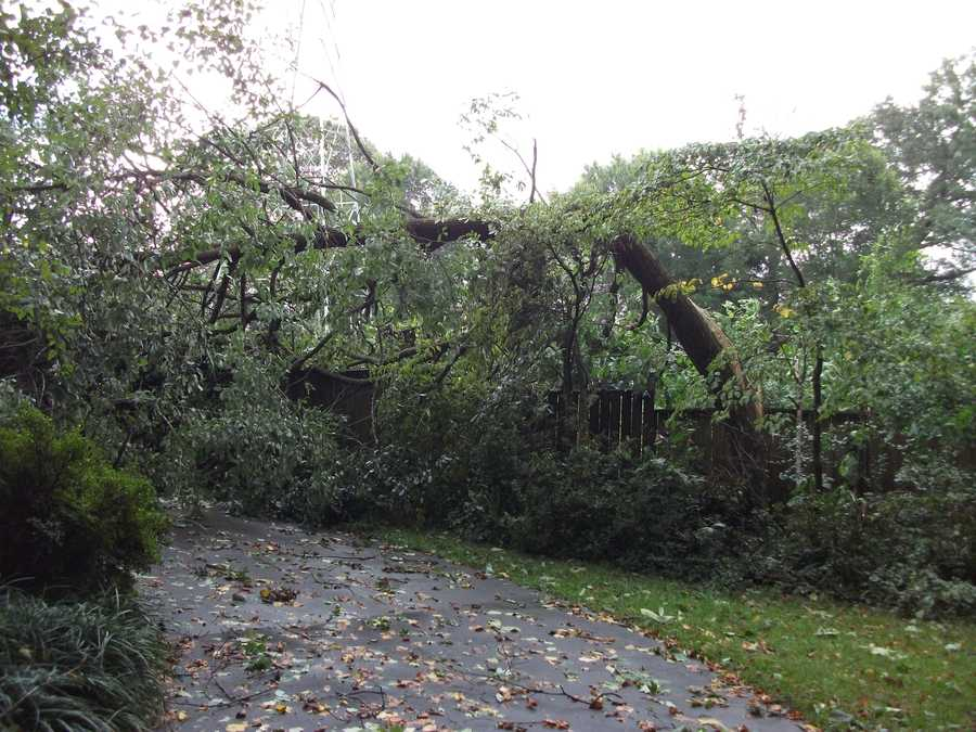 """The same tree blocking driveway from the backyard. One Valley Road neighbor said, """"they had just fixed the roof and chimney from a month ago's lighting strike to a tree and now more trees are down in their yard and house."""""""