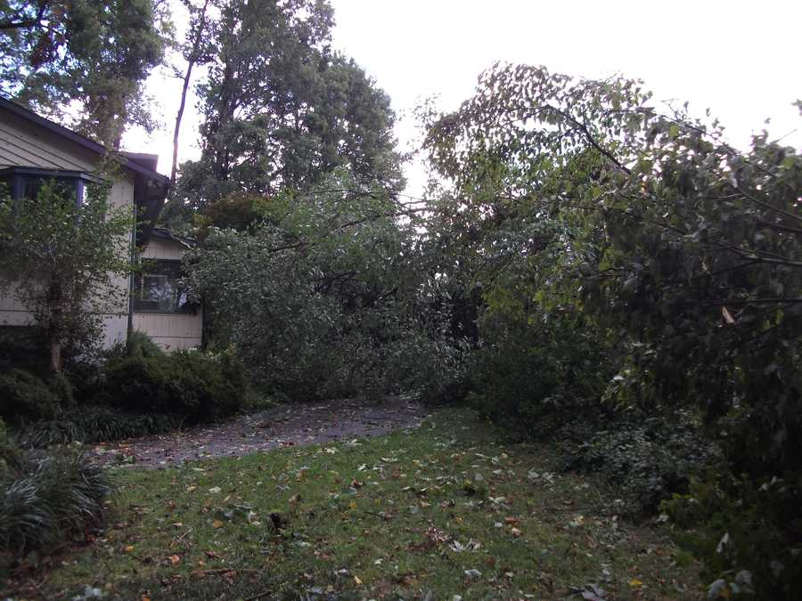 The house with the tree in the driveway and on top of the roof of this house was only one of many that wind knocked down on Friday.
