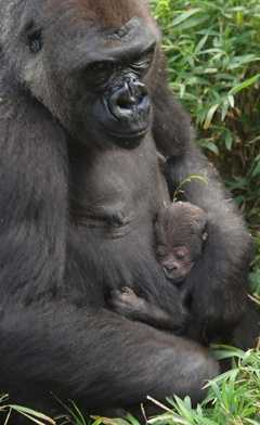 Photo by NC Zoo