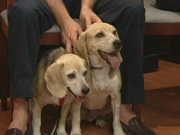 Forsyth Humane Society - Daisy and Boomer