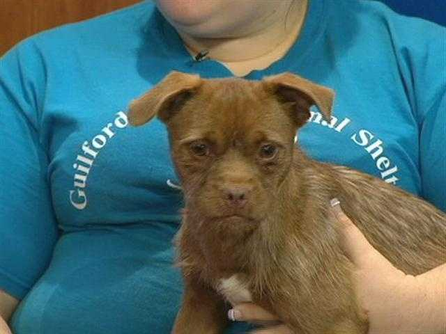 Guilford County Animal Shelter - Gypsy