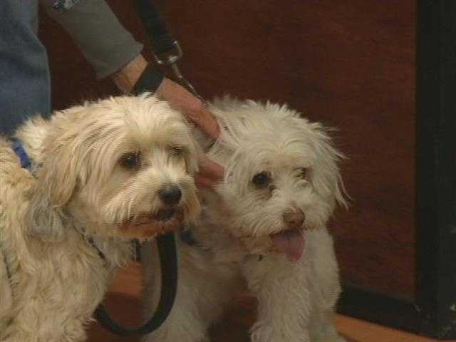 Finding Great Homes Rescue - Ace and Gator