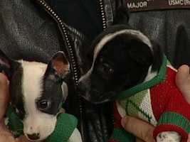 Finding Great Homes for Jack Russell Terriers