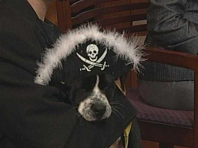 Stokes County Humane Society - Hershey