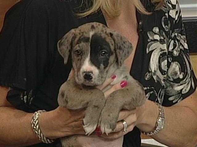 Animal Adoption and Rescue Foundation (AARF) - Leonardo