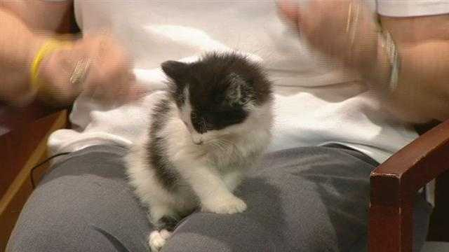 Meet Ethan, WXII12's Pet Of The Week.  Janice Freeman from AARF has more.