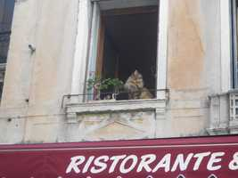 Cat napping above the Ristorante! Cute and fun pics to capture while honeymooning in Venice, Italy. Make sure to take strolls together, holding hands through the piazzos (town squares) with gelato for all the action. Especially at night for those great photos to remember forever.