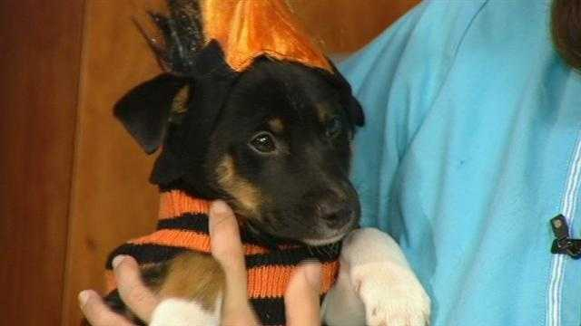 Meet Willie, WXII12's Pet Of The Week.  Allie McFadden from AARF has more.