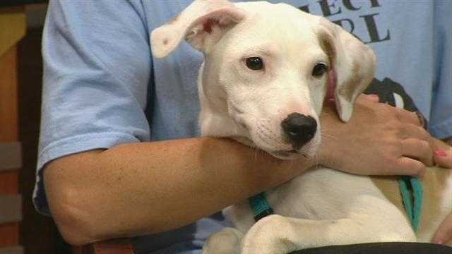 Meet Page, WXII12's Pet Of The Week from Project Pearl.
