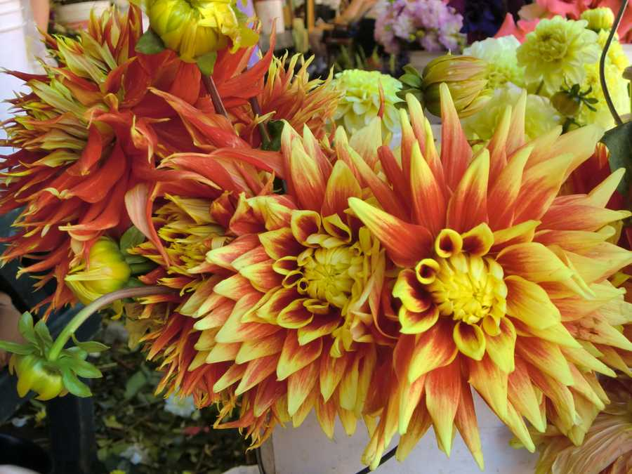 Several beautiful flowers in different shapes, sizes and smells at Pike Place Market in Seattle, Washington.