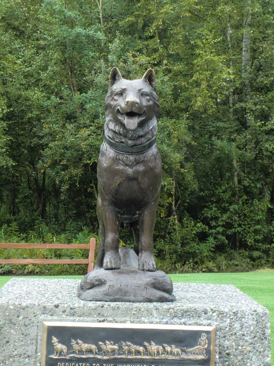 """In downtown Palmer there is a statue of """"Balto"""" who led a dog sled team to get medicine to Nome during the 1925's diphtheria epidemic. The annual Iditarod Trail Sled Dog Racecommemorates this part of Alaska's history."""