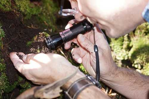Spruce-fir Moss Spider