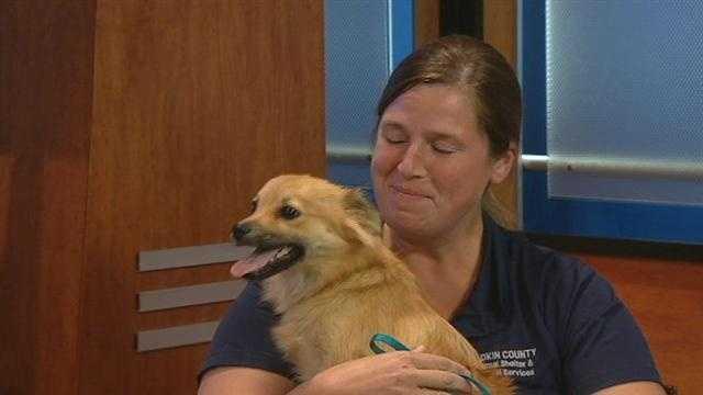 Meet Foxy, WXII12's Pet Of TheWeek.  Anna Hamby of Yadkin County Animal Shelter has more.