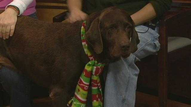 Meet Relic, WXII12's Pet Of The Week. Leslie Messick from the Lab Rescue Of North Carolina has more.