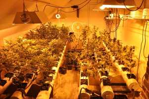 Officers continually smelled the marijuana when they were patrolling the 500 block of East Davis Street, police said.
