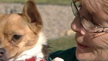 A local Chihuahua has an unusual Christmas wish this year -- a bionic paw.
