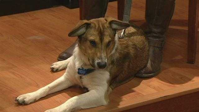 Meet Music, WXII12's Pet Of The Week.  Kate Sakmann from Steppingstones Canine Rescue has more.