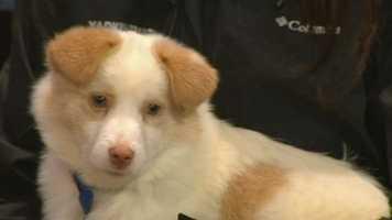 Presley from Yadkin County Animal Shelter