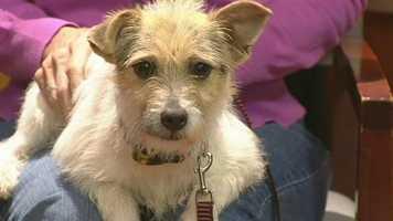 Sassy from Burlington Pet Adoption Center