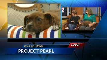 Jackie from Project Pearl has been adopted!